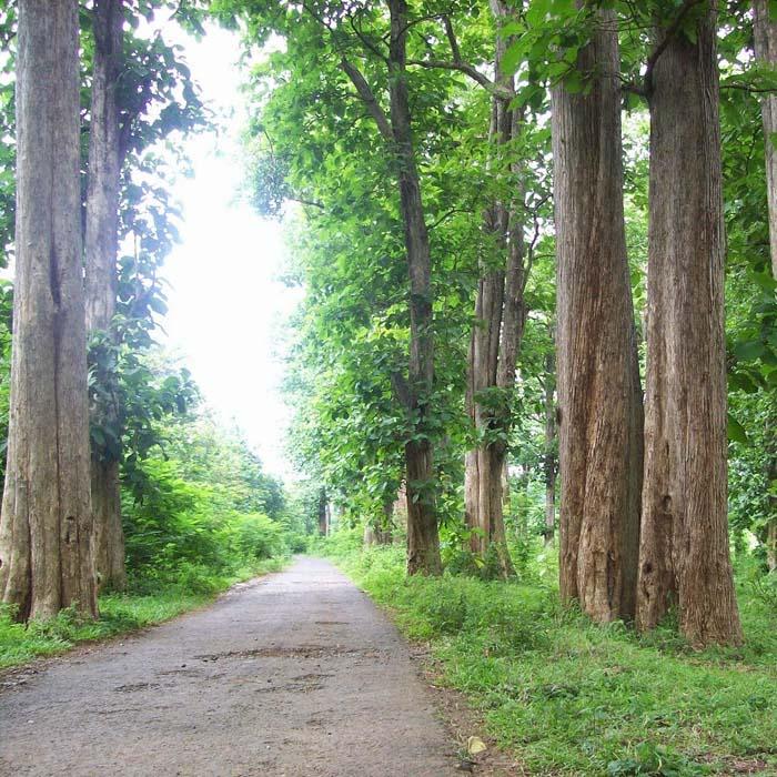 Hutan Jati Perhutani